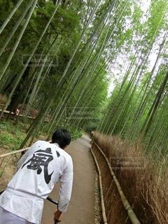 竹林の写真・画像素材[1673253]