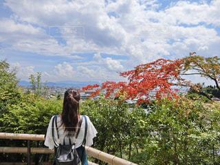 京都にての写真・画像素材[2435403]