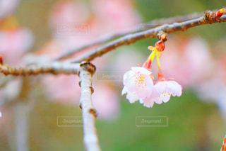 春 - No.404234