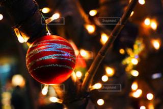 カメラ,イルミネーション,クリスマス,思い出,一眼レフ