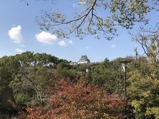 岡公園から見る和歌山城の写真・画像素材[1607646]