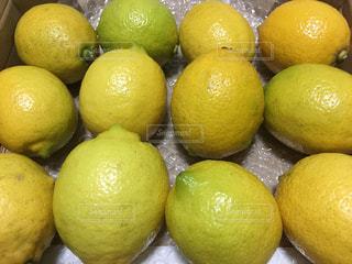 黄色,フルーツ,果物,ビタミンC,国産