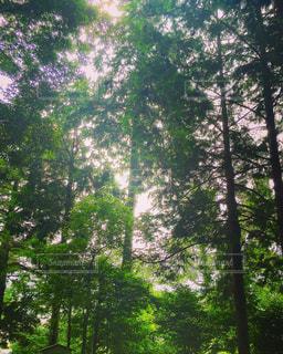 森林 - No.460557