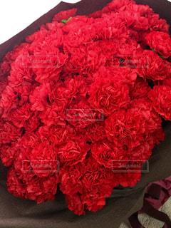 花の写真・画像素材[481007]