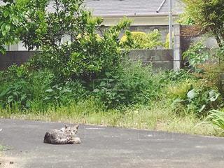 小道で日向ぼっこしてる猫の写真・画像素材[1161302]