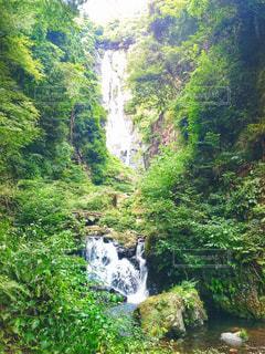 神庭の滝の写真・画像素材[1167683]