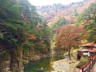 広島県の三段峡の渓谷美の写真・画像素材[1252561]