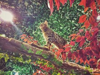 ひょう猫の森のベンガル猫の写真・画像素材[1256022]