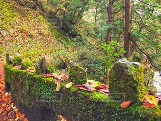 三段峡の山道の石垣の写真・画像素材[1424385]