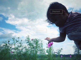 自然,空,公園,花,屋外,ピンク,コスモス,雲,手,影,女の子,光,人物,人,赤ちゃん,風,秋桜,成長,ヴィンテージ,咲き始め,育児,10ヶ月