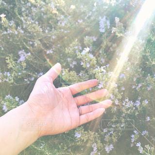 太陽の光へかざした手の写真・画像素材[1590834]