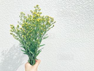 黄色の花の写真・画像素材[1837289]