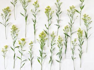 花,春,黄色,可愛い,草木,置き画,並べる,パターン,インスタ映え,フラットレイ