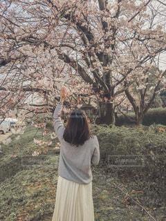 桜と女性の後ろ姿の写真・画像素材[1875953]