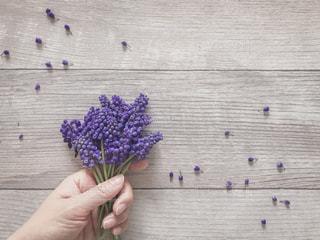 ムスカリの花束を持った女性の手の写真・画像素材[1876983]