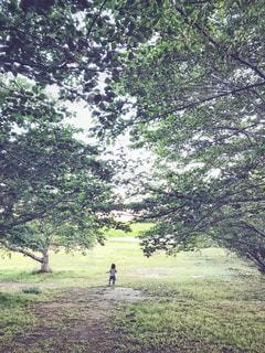 緑のアーケードを走る娘の後ろ姿の写真・画像素材[2101290]