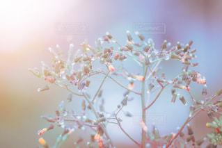 雨上がりの黄色い草花の写真・画像素材[2146522]