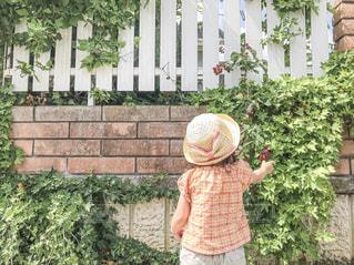 風景,夏,屋外,後ろ姿,帽子,散歩,木漏れ日,女の子,レンガ,麦わら帽子,人,塀,幼児,レジャー,お散歩,娘,ライフスタイル,蔦,草木,晴れの日,ガーデン,晴れた日,ブラックベリー