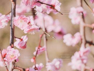 花のクローズアップの写真・画像素材[3016241]