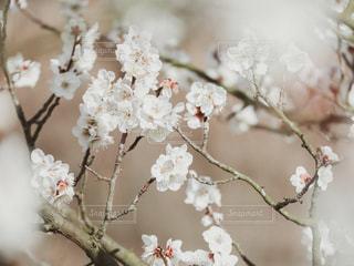 小さな白い花の写真・画像素材[3016246]