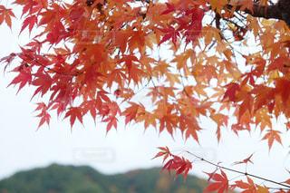 木にピンクの花のグループ - No.852157