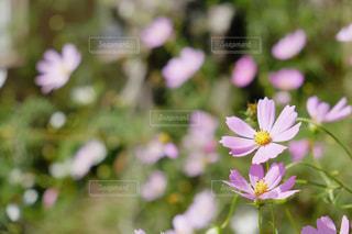近くの花のアップ - No.852428