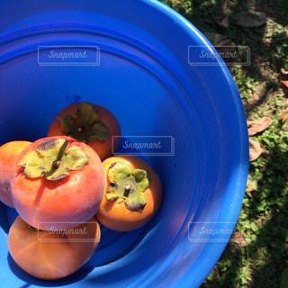 秋,フルーツ,柿,富有柿,柿狩り