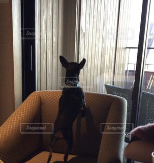犬の写真・画像素材[2481935]