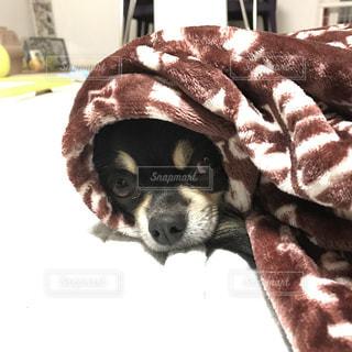 犬の写真・画像素材[283042]