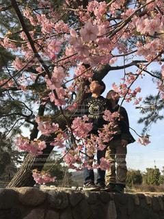 春,仲良し,兄弟,河津桜,ツーショット