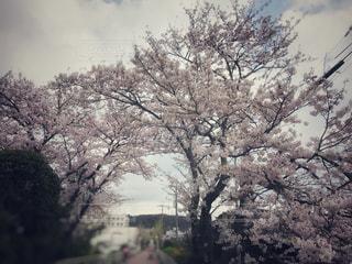 春の写真・画像素材[427183]