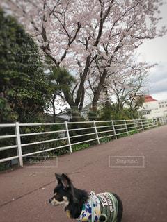 春 - No.427185