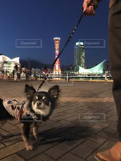 犬の写真・画像素材[472662]