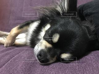 犬の写真・画像素材[475493]