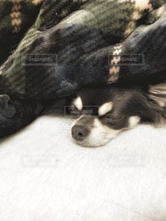 冬眠します。。。 - No.857999