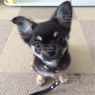 黒と茶色の犬 - No.869880