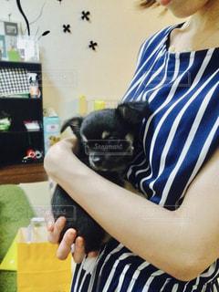女子にはたまらん赤ちゃんチワワ - No.870673