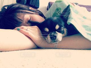 のんびり愛犬とお昼寝の写真・画像素材[1212621]