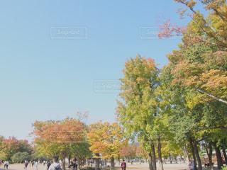 紅葉も綺麗、総合グラウンドの写真・画像素材[1598260]