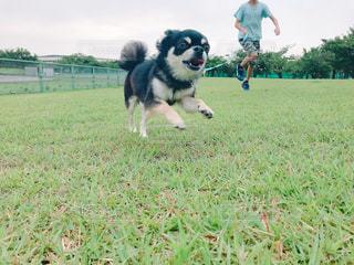 激走する愛犬と長男の写真・画像素材[2109486]
