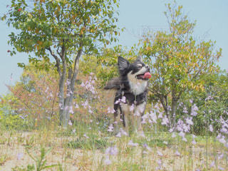 犬,自然,花,春,チワワ,かわいい,草花,笑顔,広場,可愛い,ブラックタン,キュート,小さい花,もふもふ,ファンシー