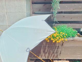 なかなか来ない梅雨の写真・画像素材[2244936]