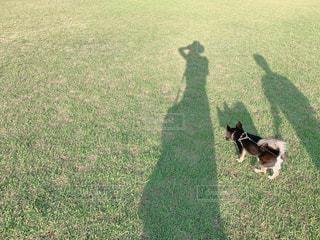 愛犬と夕方の公園でお散歩の写真・画像素材[2292915]