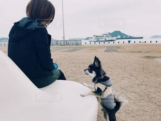 急かす愛犬とフェリーが見える公園で散歩の写真・画像素材[2700019]