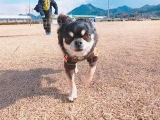 公園でダッシュする愛犬の写真・画像素材[2700065]