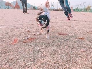 楽しくて走るっきゃない愛犬と追いかける息子の写真・画像素材[2700103]