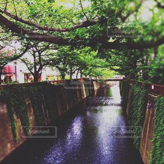 カフェ,自然,橋,東京,散歩,川,街,オシャレ,目黒川,デート,中目黒