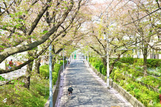 桜坂 - No.435602