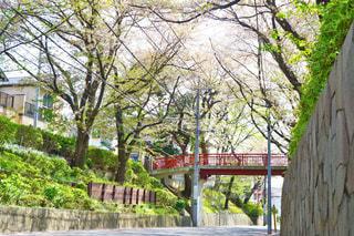 自然,桜,東京,街,坂,多摩川,桜坂,田園調布,田園調布本町