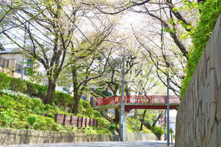 桜坂の写真・画像素材[435603]